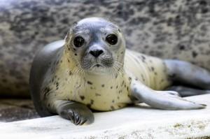 Das kleine Seehund-Mädchen Jogi ist nach unserem Bundestrainer benannt (Bild: dpa)