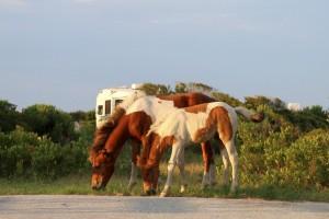 KINA - Wild und frei: Die Insel der Pferde