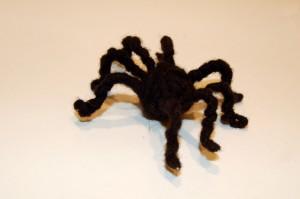 KINA - Ist diese Spinne echt?