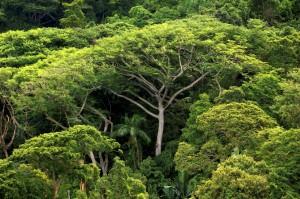Der Atlantische Regenwald muss geschützt werden (Bild: DPA)