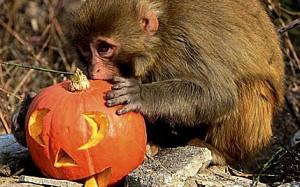 halloween_zoo_565