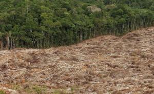 Um immer mehr Ölpalmen anzubauen, wird immer mehr Regenwald zerstört. (Bild: dpa)