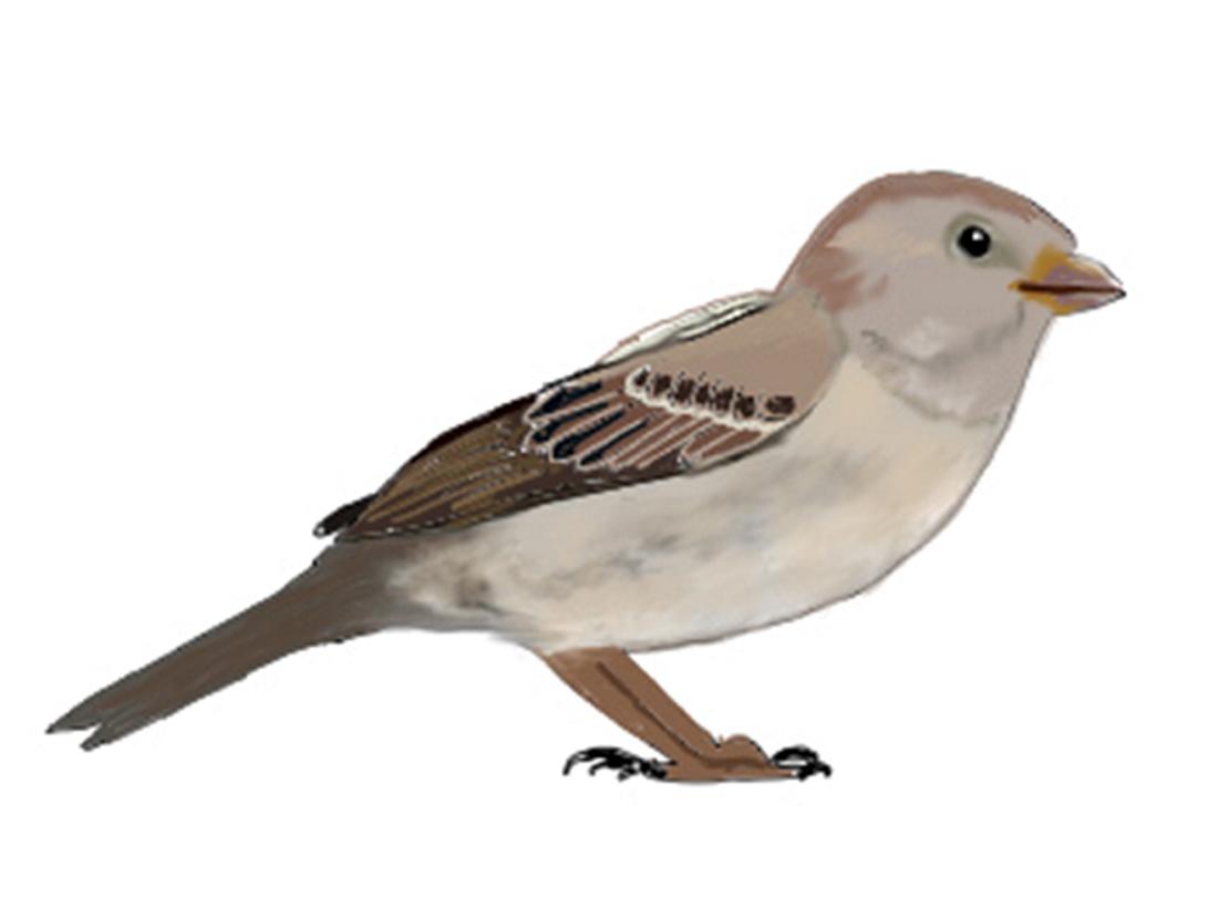 Ganz und zu Extrem Mit Steckbriefen Vögel entdecken und bestimmen | Duda.news @NL_85