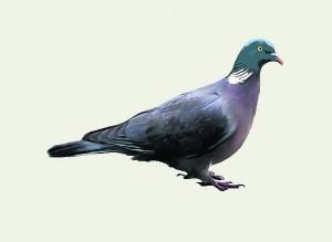 Vögel 3