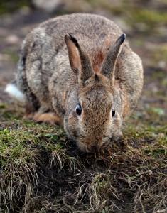 KINA - Wenn Fuchs und Kaninchen unter einem Dach wohnen