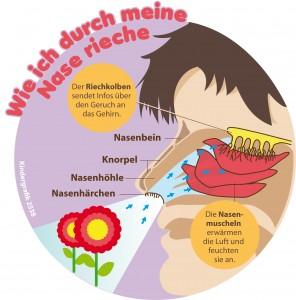 Kindergrafik: Wie ich durch meine Nase rieche (10.04.2015)
