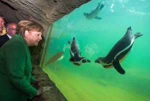 Es sieht fast so aus, als führen die Pinguine für ihre berühmte Besucherin einen kleinen Schwimm-Tanz auf. (Foto: dpa)
