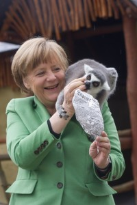 Der kleine Lemur hat keine Scheu vor der Kanzlerin. Er will futtern! (Foto: dpa)