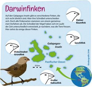 Kindergrafik: Darwinfinken (21.04.2015)