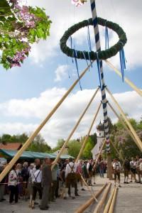 Doch kleine Hilfsmittel sind erlaubt: Mithilfe von Stangen werden die Maibäume aufgestellt. (Foto: dpa)