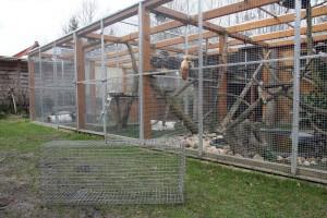 Max Enders hat den Tieren extra einen großen Käfig gebaut. Auf den Farmen haben sie es nicht so gut, dort ist der Käfig sehr viel kleiner. (Foto: dpa)