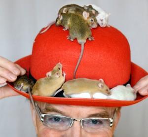 Rupperts Mäuse heißen Heidi, Schöne Angela und Dicker Helmut. (Foto: dpa)