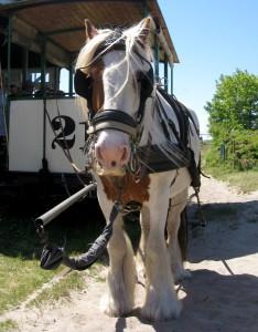 Ein Pferd zieht die Bahn auf Spiekeroog. In größeren Städten waren die Bahnen früher oft größer, dafür brauchte man dann zwei Pferde. (Foto: dpa)