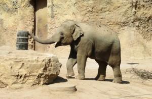 ... Schnell ein Elefant. (Fotos: dpa)