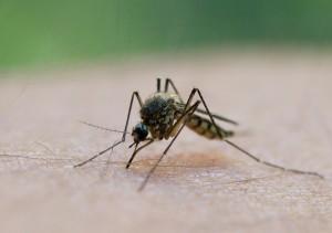 Wenn jemand übertreibt, wird aus einer Mücke...